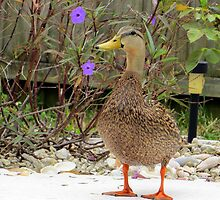 Just Ducky by AuntDot