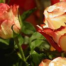 TO YOU MY FRIENDS WHO LOVE FLOWERS -- TO YOU MY FRIENDS ROSES FOR  CHRISTMAS  DALL&#x27;ITALY !---VETRINA RB EXPLORE 13 NOVEMBRE 2012 !!!! by Guendalyn