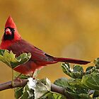 Alarmed  Northern Red Cardinal by Debbie Oppermann
