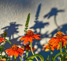 Zinnia into Shadow by seeya