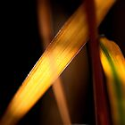 Backlit leaf by Paul Ridley