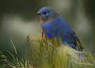 A Bird in the Grass by Eileen McVey
