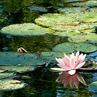 Waterlily in Sunlight | Giverny, France by rubbish-art
