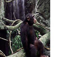 Chimp1 by tapiona