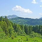 Transylvanian Forests by Graeme  Hyde