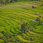 Terraced rice paddies in Eastern Bali, Indonesia by Michael Brewer
