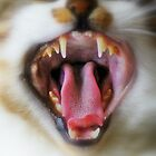 Cat teeth by flashcompact