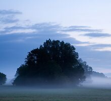 Misty marsh by Ian Middleton