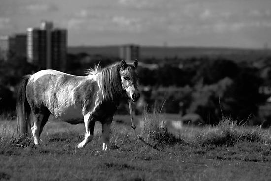 Gypsy Pony by Nigel Bangert
