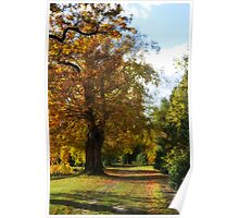 Autumn Colours Poster
