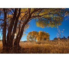 Tree Perspective 1 Photographic Print