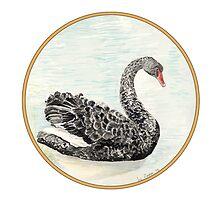 Black Swan, Birds of Hepburn, 2012 by Liz Archer