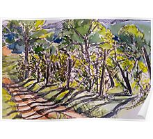 Vineyard, early morning. La Vigna. Italy. Pen and wash 2010Ⓒ 42x32cm framed. Poster