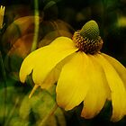 Yellow flower by brut