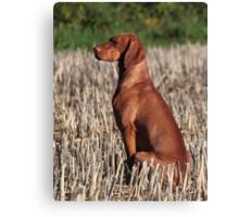 Aristo dog Canvas Print