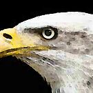 Bald Eagle by Sharon Cummings