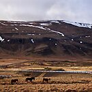 Iceland by PorcelainPoet