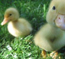 Sweet Little Mac and Belle by KelseyLeeAnn
