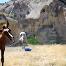 Cappadocia - The Land of Beautiful Horses by OilPrints