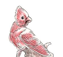 Sketch -- Mythological House Griffin, Cardinal Variety by Stephanie Smith