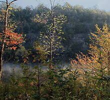Mountain Fork Riverbank Trees by Carolyn  Fletcher