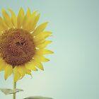 Sun flower by Alita  Ong