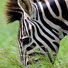 African Art Burchells Zebra by Leigh Diprose