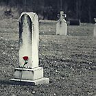 Rose Left at Grave by April Koehler