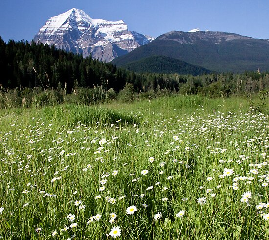 Meadow, Mt Robson, BC by Andy Townsend