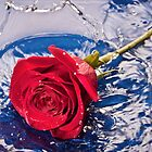 Rose Splash by April Koehler