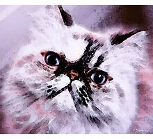 Persian Cat Art - Just Moi Photographic Print