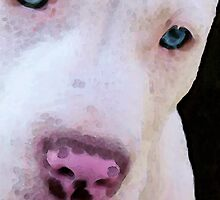 Pit Bull Art - Not A Fighter by Sharon Cummings