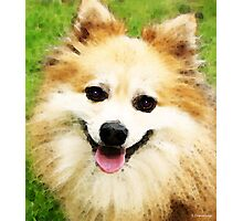 Pomeranian - Bright Eyes Photographic Print