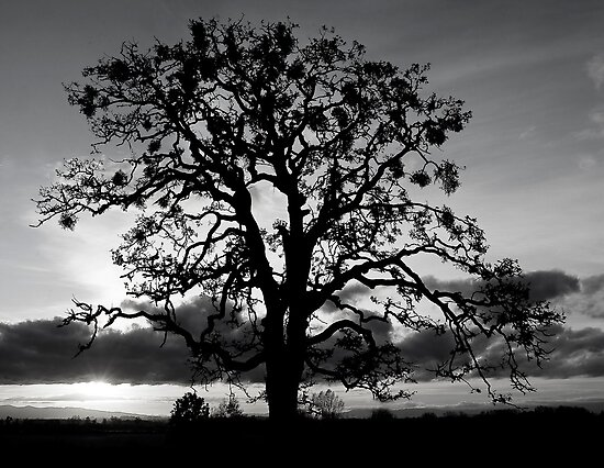 Lone Oak Silhouette by Nick Boren