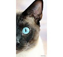 Siamese Cat Art - Half The Story Photographic Print