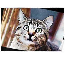 Cat Art - Who Me Poster