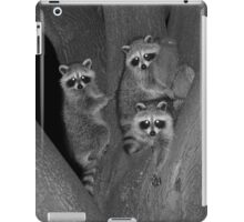 Three Baby Raccoons iPad Case/Skin