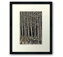 Cottonwood Framed Print