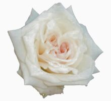 Close Up View Of A Beautiful White Rose. Kids Clothes
