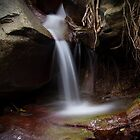 rainforest creek #1 by col hellmuth