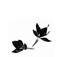 Black White [Print and iPhone / iPad / iPod Case] by Damienne Bingham