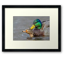 What's Up Duck! Framed Print