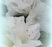 White Azalea Two iPad Case by Betty Northcutt