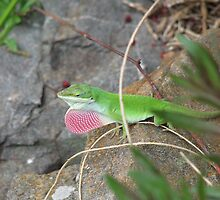 Male Lizard in the Garden by JeffeeArt4u