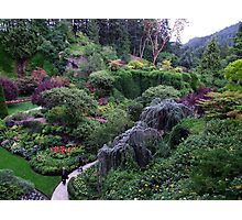 The Sunken Garden Photographic Print