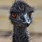 Oh, Those Emu Eyes! by CarolM
