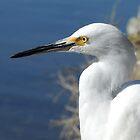 Snowy Egret by Caren della Cioppa