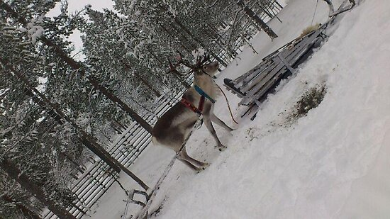 Reindeer Sleigh Ride in Ivalo  by nidredbubble012