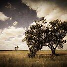Australian Bush by Caroline Gorka