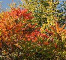 Colours of Autumn  by wulfman65